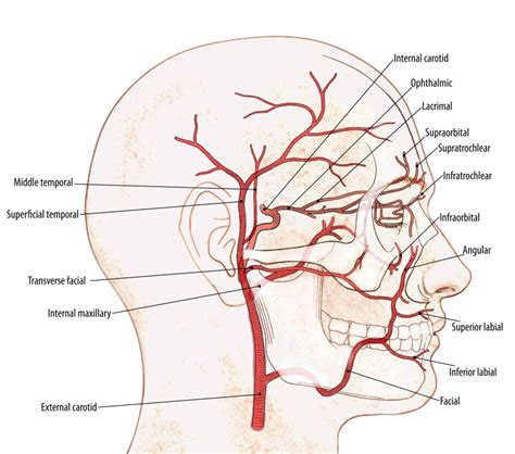 diagram of carotid artery neurosurgeon checkup left side blind