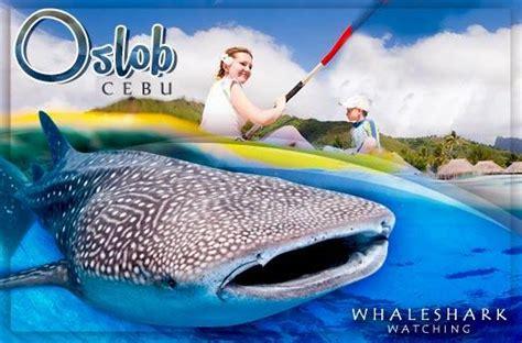 cebu promo   airfare oslob whaleshark watching