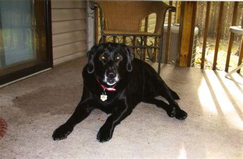 puppy funeral minnesota buddy obituary