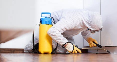 exterminating bed bugs kingston pest control pest extermination removal services