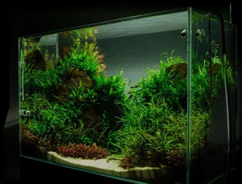 Aquarium Dekorieren Ideen by Aquarium Einrichten Schritt F 252 R Schritt Anleitung