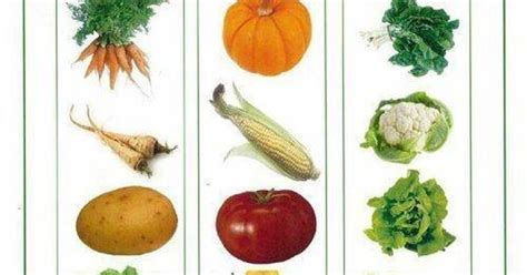 shallow root vegetables list search garden - Shallow Rooted Vegetables