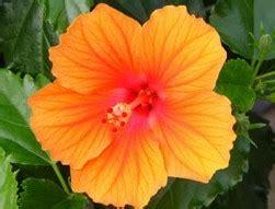 alle verschillende bloemen bloemen soorten halve parasol