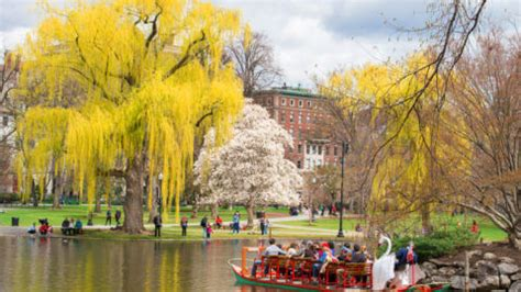 boston swan boats donation request boston public garden history and information guide