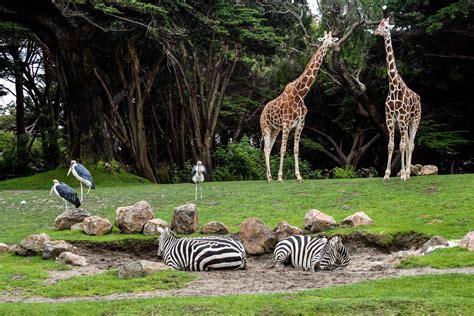 zoologischer garten eintrittspreise berlin zoos in deutschland deutschlandliebe by urlaubsguru