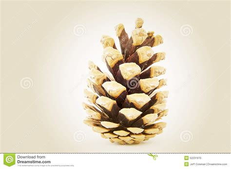 Max Brown By Dreamcone fir cone stock photo image of golden seed autumn seeds 52231970