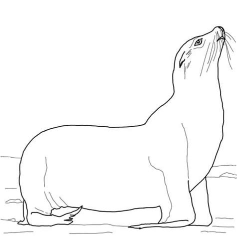 coloring pages sea lions california sea lion on a beach coloring page