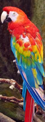 macaw colors macaw parrot a rainbow of colors godinterest