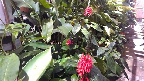 tropical plants for sale in florida big sale this week plant photos 8 28 2013 exotica