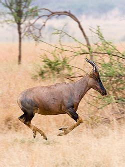 serengeti national park wikitravel