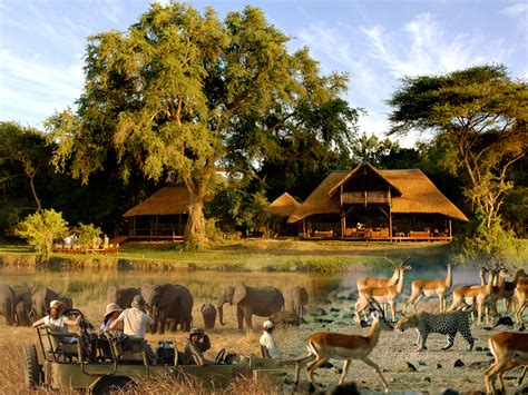 african safari safari around the world around the world tours