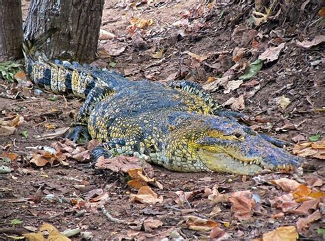 10 Facts About The Forest Floor by 10 Interesting Facts About The Rainforest Touring