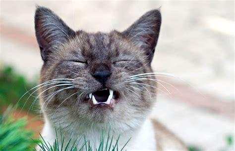 wann ist katze ausgewachsen deine katze niest hier liest du wann das ein grund zur