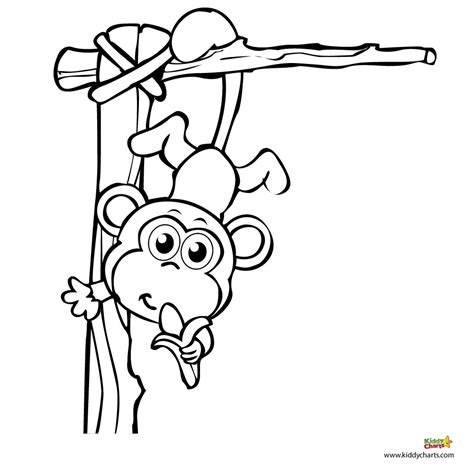 jungle monkey coloring page hanging monkey template clipart panda free clipart images