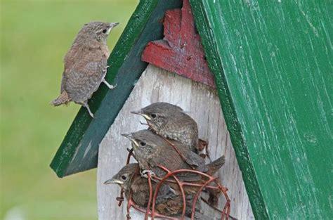 Wren House by House Wren Backyard Birds Birds And Blooms