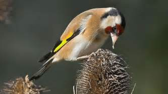 And Their Feeders The Rspb Birds Wildlife When To Feed Birds