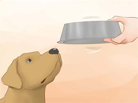 how to get puppy to drink water urine out of toilet the best of 2017