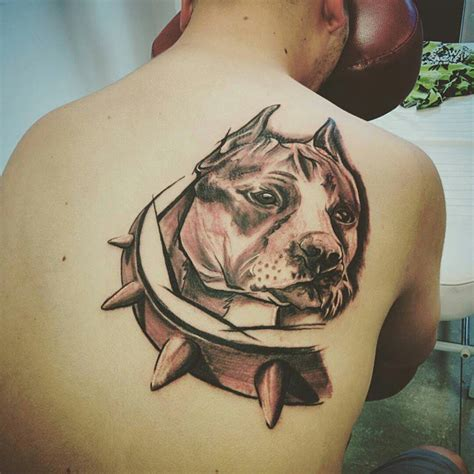pitbull tattoo design tribal pitbull tattoos pictures to pin on