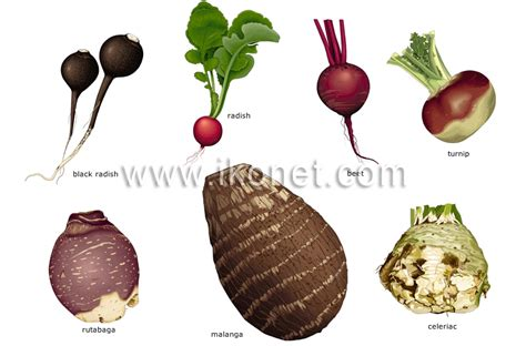 root vegetables food and kitchen gt food gt vegetables gt root vegetables