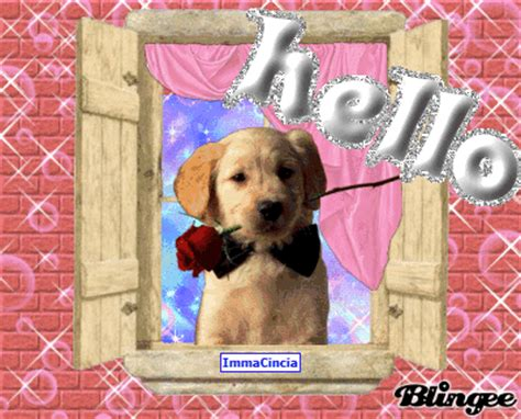 hello puppy hello picture 127658263 blingee
