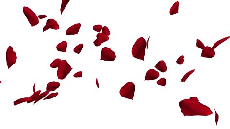 Falling And Swirling Red Rose Petals Over White Background Valentine Slow Motion Hd Animation Falling Flower Petals After Effects Template Free
