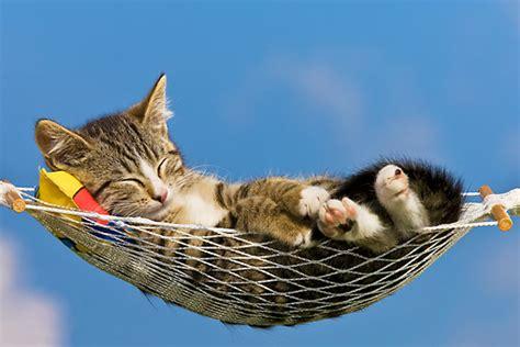 amaca sul mare hammock animal stock photos kimballstock
