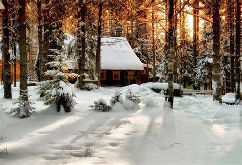 Snowy Cabins by Snowy Cabin In The Woods Winter White