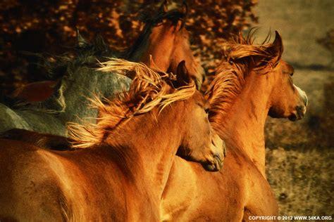 Jufm20 Bodysuit Movement Blue Animal autumn horses 54ka photo