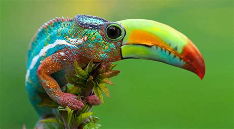 designcrowd fake 41 animal hybrid photoshop creations will blow your mind
