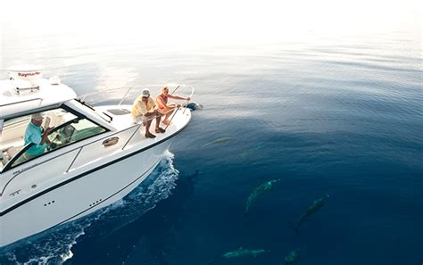 whaler like boats 330 outrage boston whaler