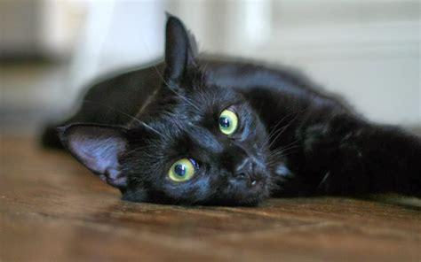 desktop wallpaper black cats desktop hd wallpapers free downloads black cat hd wallpapers