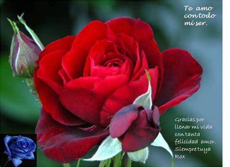 imagenes de rosas para mi amor pr 225 ctica 22 y 23 de power point roxamora1729