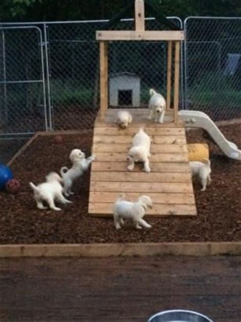 puppy playground 8 best images about puppy playground on agility and pits