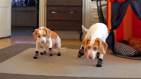 dogs in socks 15 dogs in the world new