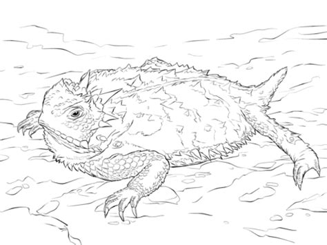 coloring page horned lizard realistic texas horned lizard coloring page free