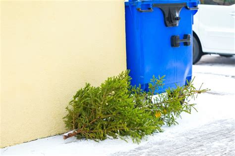 no more curb recycling for christmas trees in philly