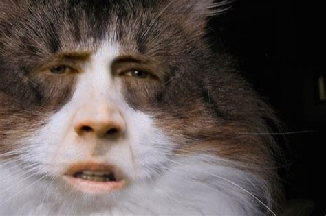 nicolas cage cats make your own meme