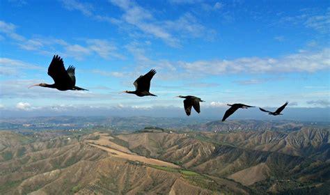 imagenes de karma bird fly perch 233 gli stormi di uccelli volano a v wired
