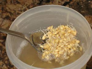 Can Rejuvelac Help To Detox rejuvelac recipe how to make probiotic drink