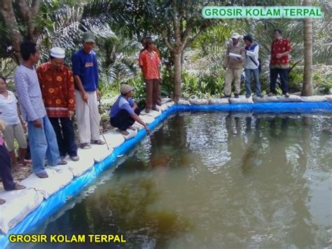 Bibit Lele Kediri budidaya ikan lele sangkuriang di kolam terpal agro terpal