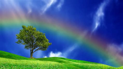 Rainbow Green green fields and rainbow wallpaper wallpapers9
