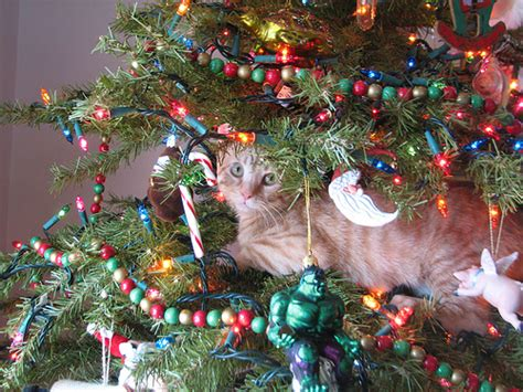 pet pourri holiday stress pets