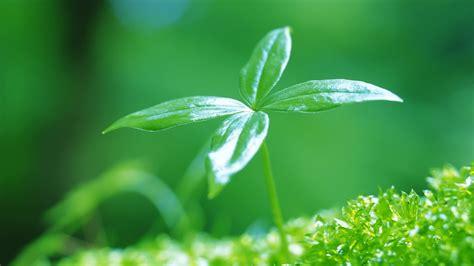 Home Decor Plants Pin の を萌芽 壁紙 1920x1080 On Pinterest