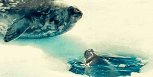 imagenes animadas gif imagenes gif de focas marinas y morsas