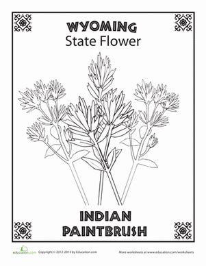 coloring page indian paintbrush wyoming state flower worksheet education com