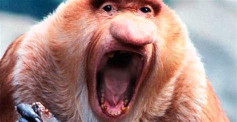 imagenes de animales raros y feos los 10 animales m 225 s feos del mundo taringa