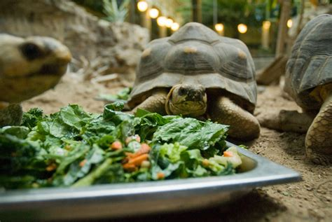 Kitchen Herb by Animal Food Amp Nutrition Center Saint Louis Zoo