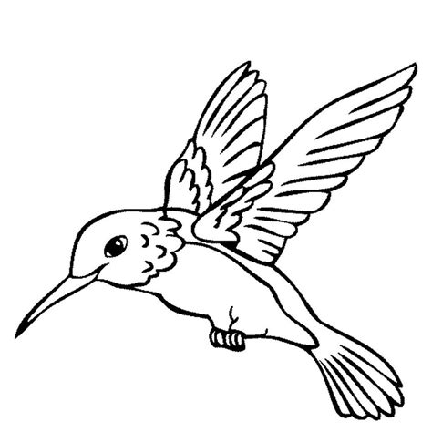 hummingbird coloring pages hummingbird animal coloring pages letsridenow
