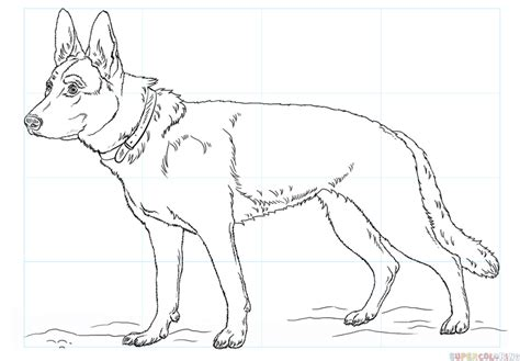 how to draw a german shepherd how to draw a german shepherd step by step drawing tutorials