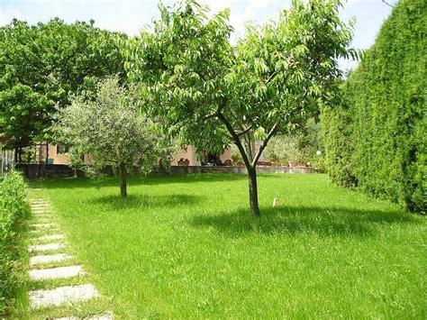 alberi giardino alberi da ombra alberi scegliere gli alberi da ombra